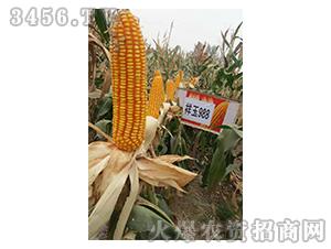祥玉988-玉米种子-