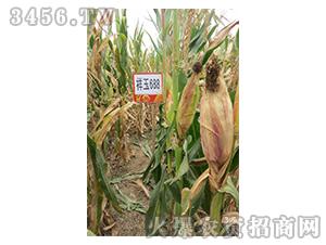 祥玉688-玉米种子-