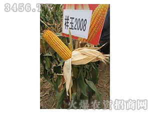 祥玉2008-玉米种子-红旗种业