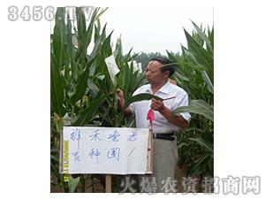 祥禾壹号-玉米种子-红旗种业
