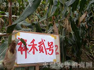 祥禾贰号-玉米种子-红旗种业