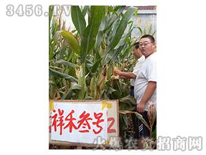祥禾叁号-玉米种子-红旗种业