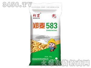 郑麦583-小麦种子-金博农