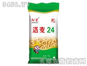 洛麦24-小麦种子-金博农