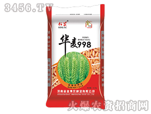 华麦998-小麦种子-金博农
