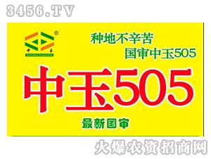 中玉505-玉米种子-地瑞种业