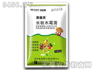 生姜专用长枝木霉菌-姜瘟灵-沃肽美