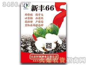新丰66-棉花种子-恒创种业