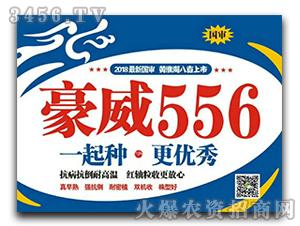 玉米种子-豪威556-龙大种业