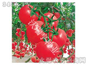 哈莉特776-番茄种子-沃瑞亨