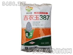 吉农玉387-玉米种子-中科种业