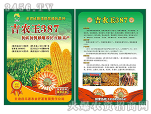 吉农玉387(画册)-玉米种子-中科种业