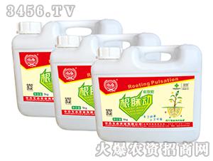微生物菌剂冲施肥-根脉动水菌液-中仓