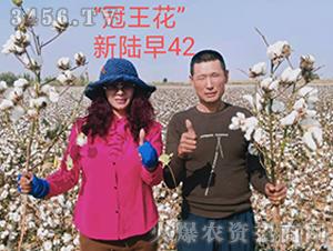 新陆早42棉花种观摩图5