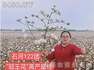 种旺农业石河122团参观