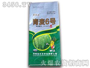 青麦6号-金不换-未农种业