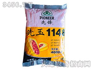 金糯2000-玉米种子-群帅农业
