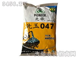 先玉047-玉米种子-群帅农业
