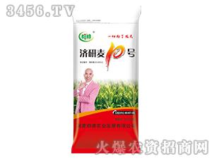 济研麦10号-小麦种子-群帅