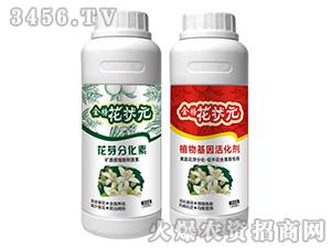 植物基因活化剂+花芽分化素-金榜花状元-台湾豆本豆