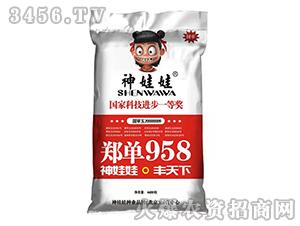 神娃娃郑单958-玉米种子-龙大种业