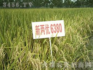 新两优6380-籼稻种子-中江种业