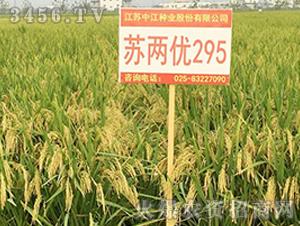 苏两优295-籼稻种子-中江种业