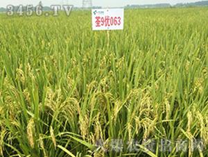 荃9优063-籼稻种子-中江种业