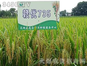 赣优735-籼稻种子-中江种业