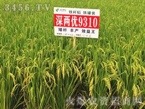 深两优9310-籼稻种子-中江种业