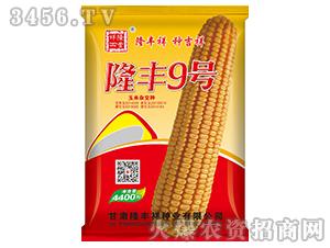 隆丰9号-玉米种子-隆丰祥