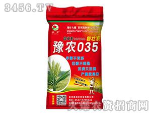 豫农035-小麦种子-晨禾种业