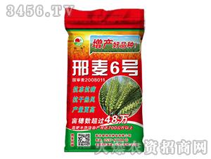 15kg邢麦6号-小麦种子-晨禾种业