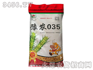 豫农035-原种小麦种子-晨禾种业