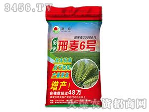 国审邢麦6号-小麦种子-晨禾种业