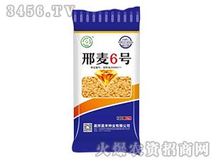 25kg邢麦6号-小麦种子-晨禾种业