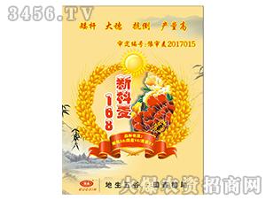 新科麦168-小麦种子-国鑫农业