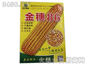 金穗86-玉米种子-亚太种业