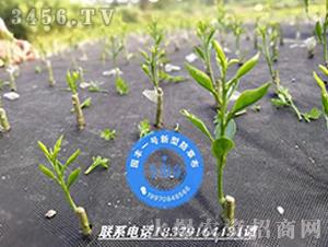 园丰一号新型防草布案例8