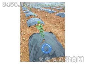 园丰一号新型防草布案例5