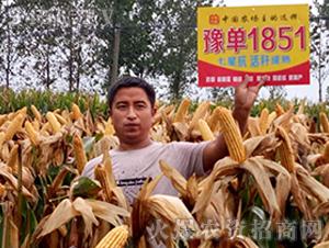 豫单1851-玉米种子-农垦良种