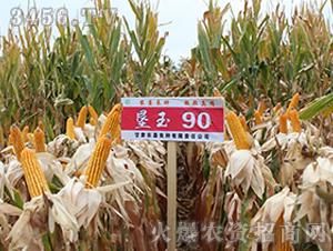 垦玉90-玉米种子-农垦良种