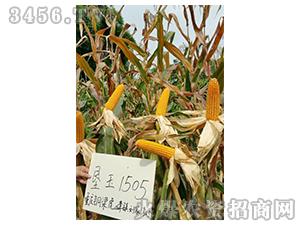 垦玉1505-玉米种子-农垦良种