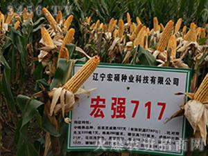 宏强717-玉米种子-