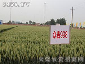 众麦998-小麦种子-顺鑫大众