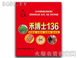 禾博士136-玉米种子-中科瑞华