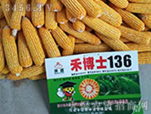 禾博士136玉米种展示效果图-中科瑞华