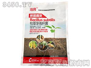 枯草芽孢杆菌-根菌腐灵