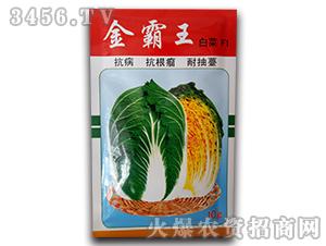金霸王白菜F1-白菜种