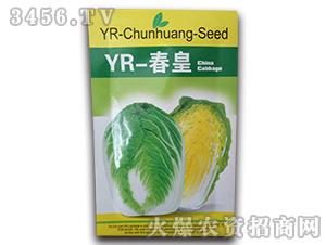 YR-春皇-白菜种子-